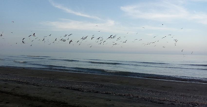 خط ساحلی از مکان های دیدنی انزلی