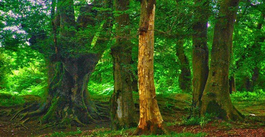 پارک جنگلی انزلی از جاهای دیدنی انزلی