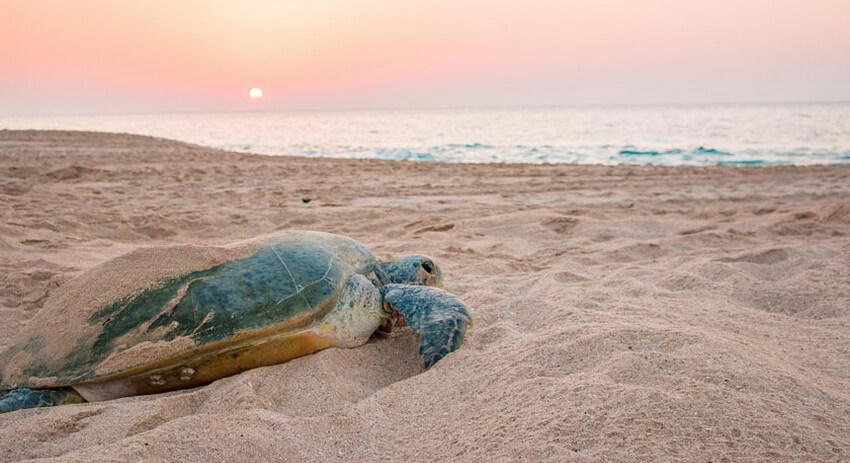ساحل لاک پشت ها زیباترین ساحل ایران