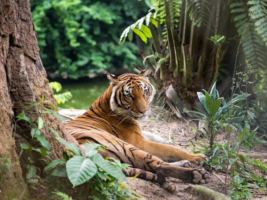 حیات وحش مالزی