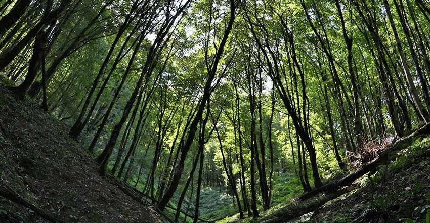 ویژگی های جنگل های هیرکانی