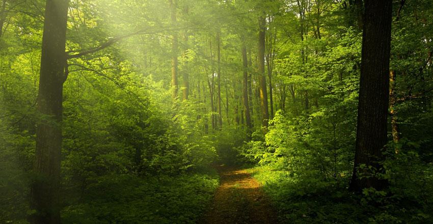 آب و هوای جنگل های هیرکانی