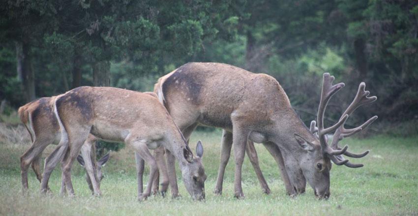 منطقه حفاظت شده حیات وحش آستارا