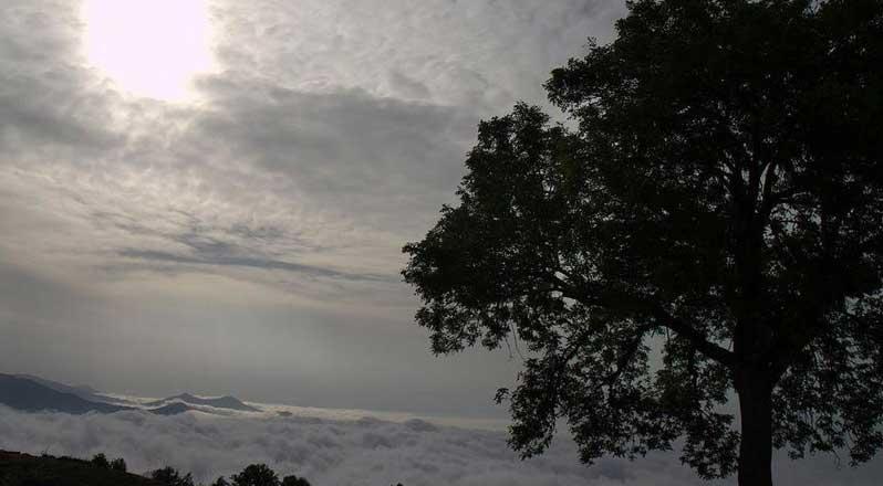 قصه جنگل ابر