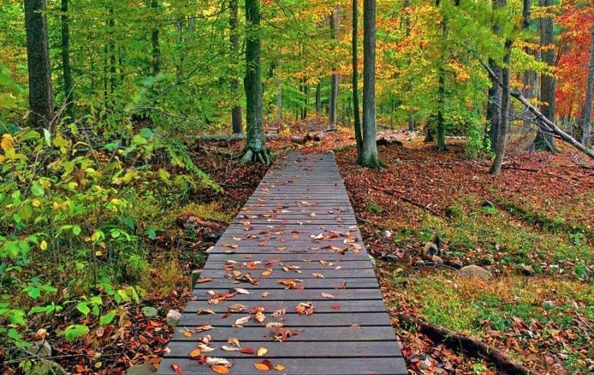 جاذه جنگل گیسوم