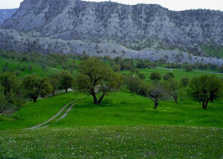 منطقه جنگلی ششدار در استان ایلام
