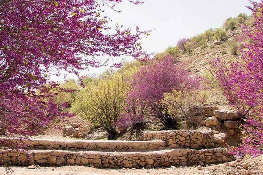دره ارغوان از جاهای دیدنی ایلام