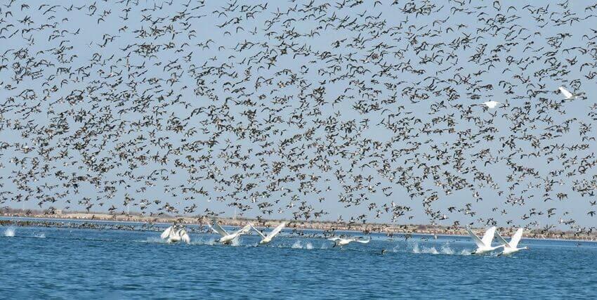 پرندگان آشوراده