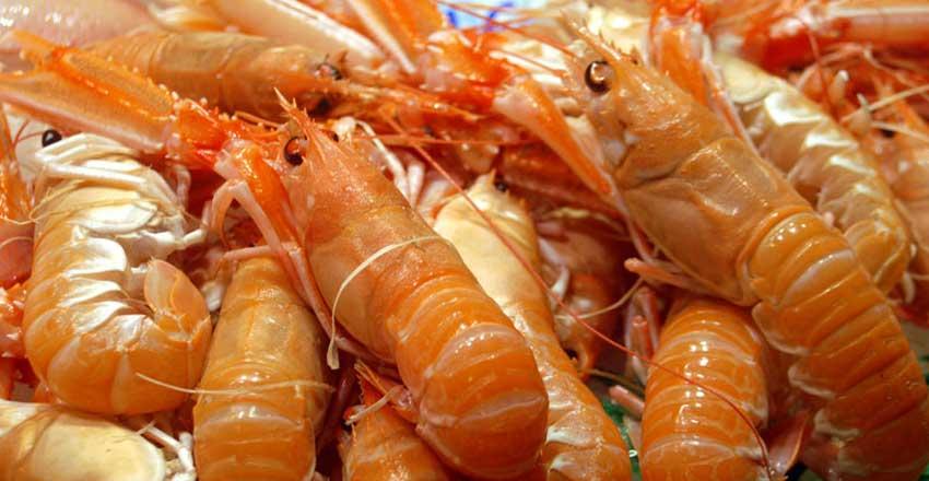 غذاهای دریایی گالیسیا در اسپانیا