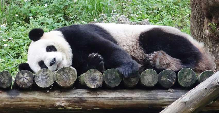 باغ وحش پکن از جاهای دیدنی پکن