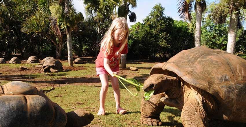 ملاقات با لاکپشتها در جزیره موریس