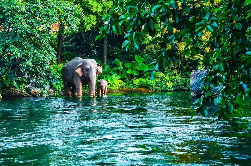 پارک ملی خوائو یای - سفر به تایلند