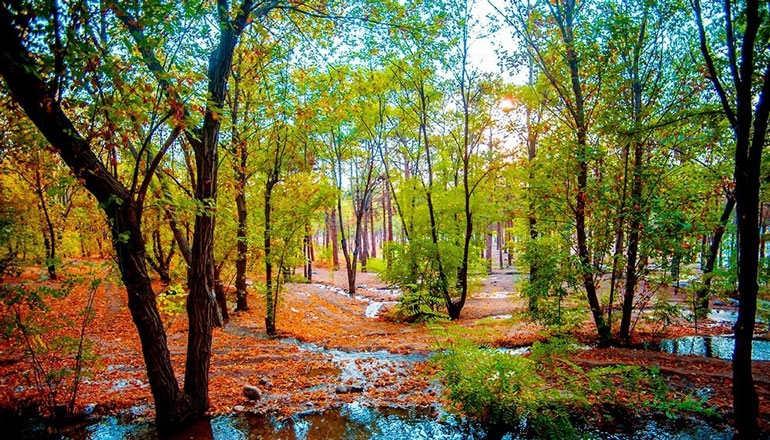 پارک چیتگر تهران؛ طبیعتگردی در پایتخت
