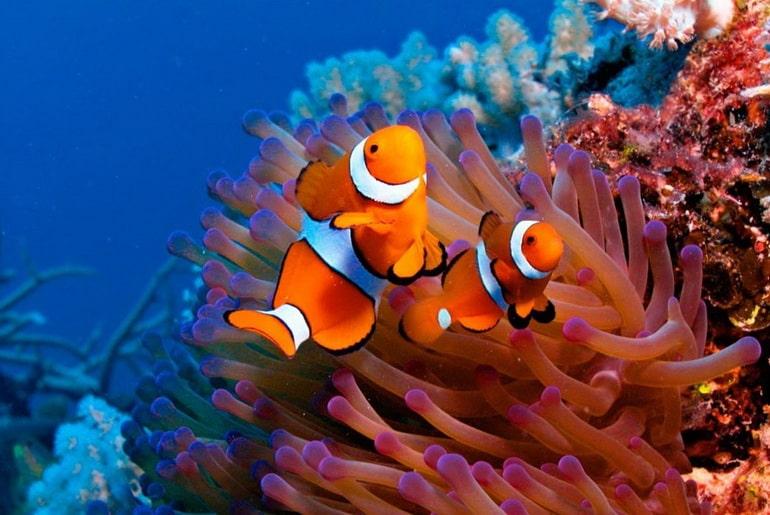 آکواریوم کیش؛ دریچهای به دنیای رنگارنگ زیر آب