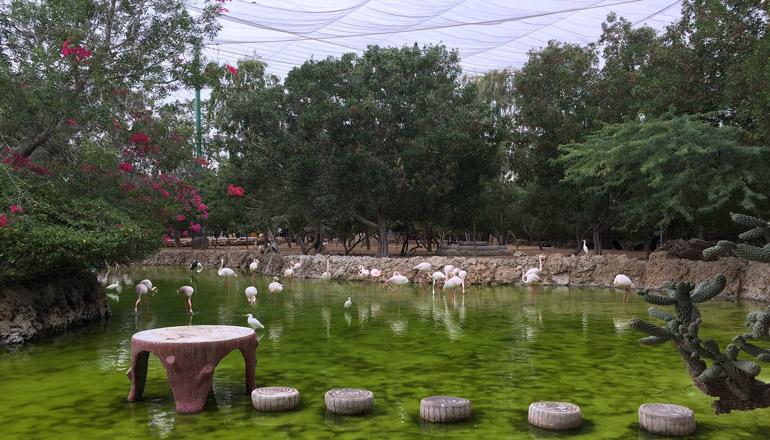 باغ پرندگان کیش؛ دنیایی پر از نادیدههای طبیعت