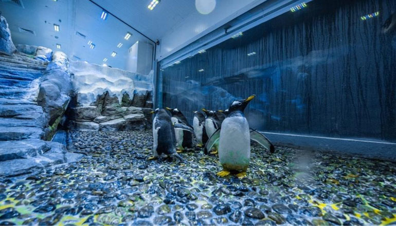 دنیای پنگوئن های دبی