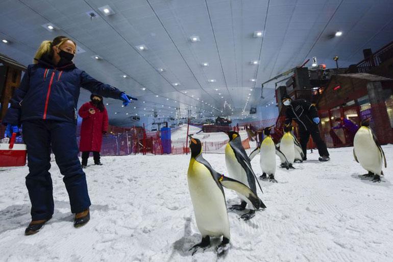 پنگوئنهای قطبی در دل کویر