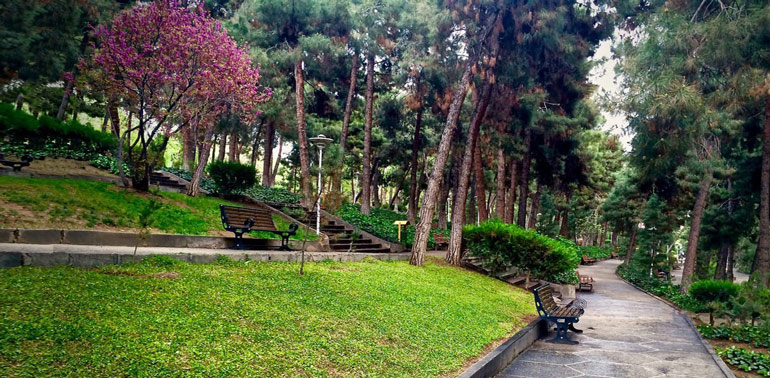 پارک جنگلی لویزان تهران؛ هرگزم نقش تو از لوح دلوجان نرود!