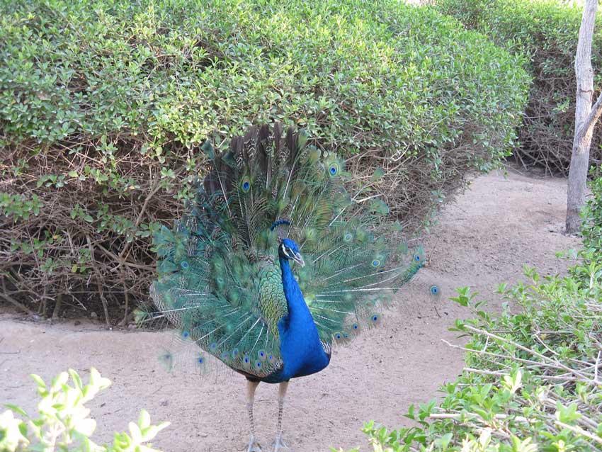 جاذبه های کیش باغ پرندگان