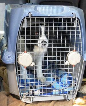 حمل حیوان خانگی با هواپیما