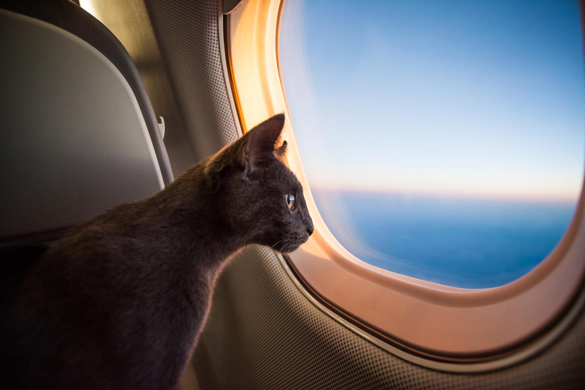 هزینه و شرایط حمل حیوان خانگی با هواپیما، قطار و اتوبوس