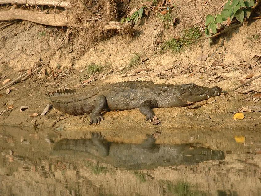 منطقه حفاظت شده گاندو